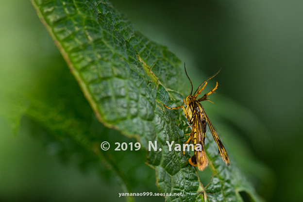 yamanao999_insect2019_097