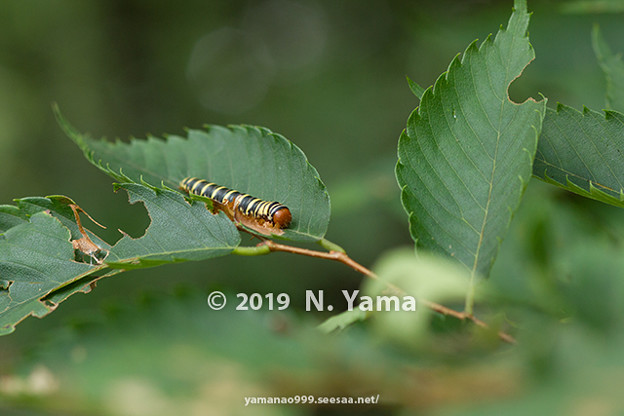 yamanao999_insect2019_125