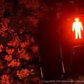 Photos: Red Light