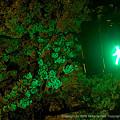 Photos: Green Light