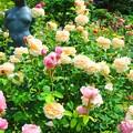 2.イングリッシュ ガーデン ¥B
