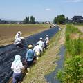 Photos: 2018/06/24環境保全会活動3