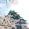 春の名古屋城3
