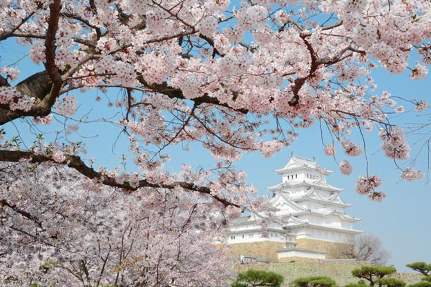 春の姫路1