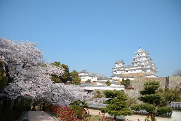 春の姫路2