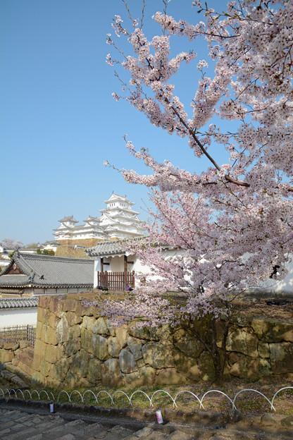 春の姫路3
