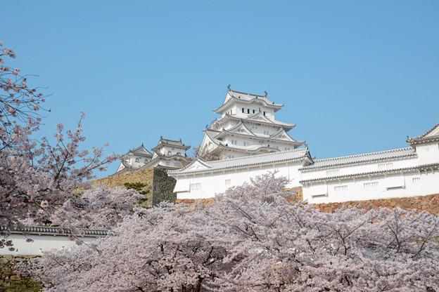 春の姫路4
