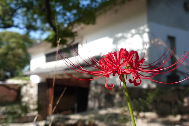 城郭に咲く紅い花