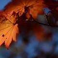 紅葉の季節が来た