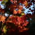 紅葉の季節が来た2