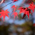 紅葉の季節が来た3