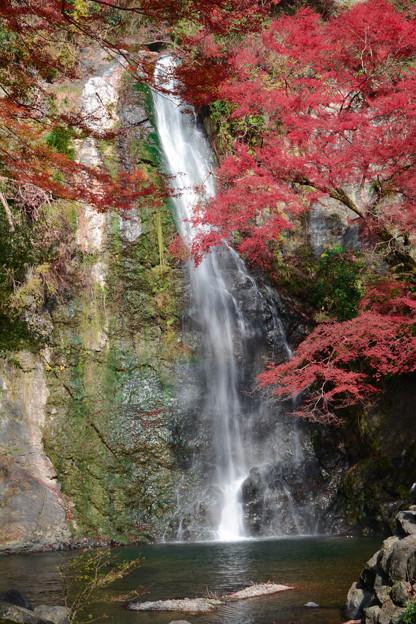 今年も紅葉の滝