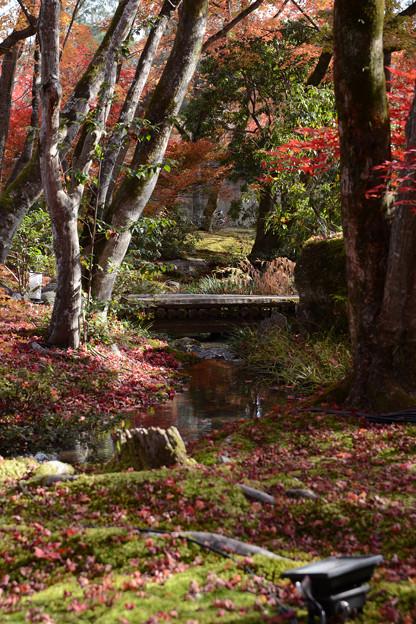 秋の庭園の小川