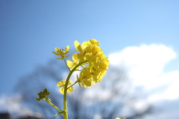 春のよう2