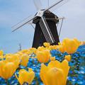 春の風車2
