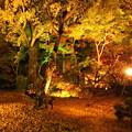 Photos: 永観堂ライトアップ4