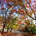 勝尾寺の紅葉 極彩美2