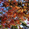 Photos: 勝尾寺の紅葉3
