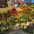 勝尾寺の紅葉5