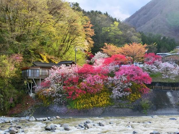 昼神温泉の花桃