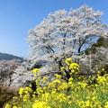 写真: 春の里山