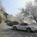 写真: ひょうたん桜の駐車場2