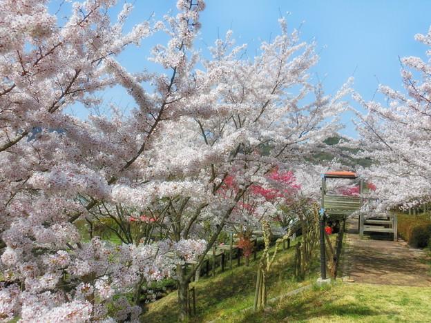 写真: 安神山公園