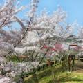 安神山公園