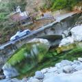 写真: 面河グリーン