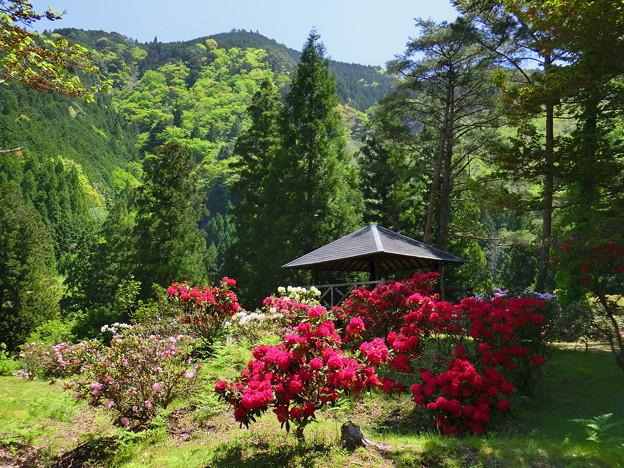 石楠花の庭