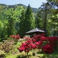 写真: 石楠花の庭