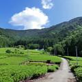 青空と茶畑