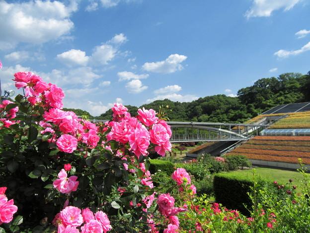 花フェスタ記念公園1