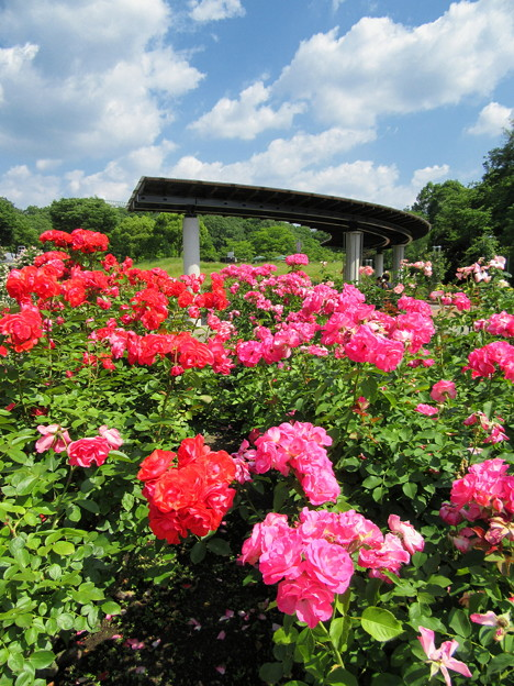 花フェスタ記念公園3