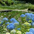 写真: 花の郷