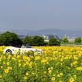 写真: ひまわり畑2