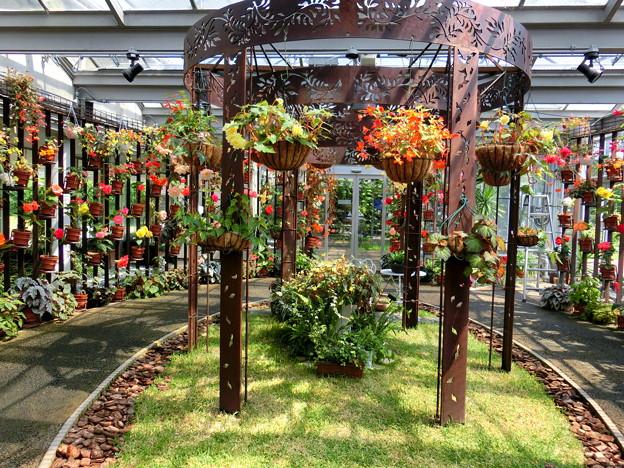 ベゴニアの庭園