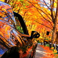 Photos: 秋に溶け込む