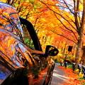 秋に溶け込む