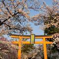 Photos: 平野神社