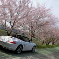 Photos: 姉川の桜並木2