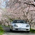 Photos: 姉川の桜並木