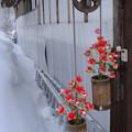 紅い花の釣瓶