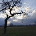 見つめる樹