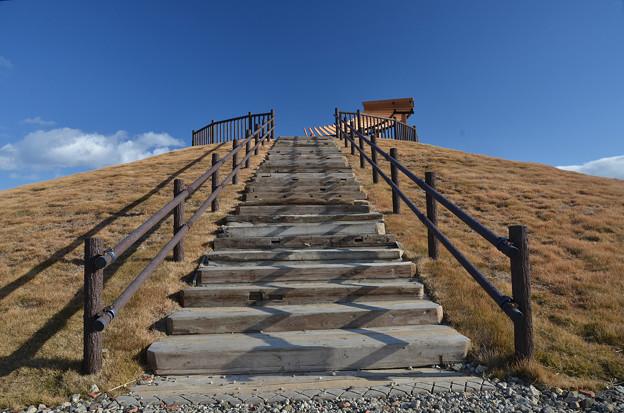 写真: 震災瓦礫で築いた千年希望の丘