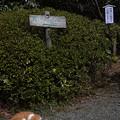 写真: 浄妙寺のももちゃん