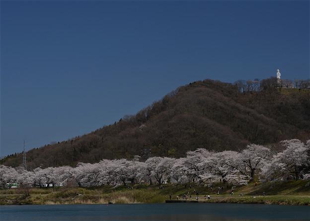 Photos: 平和大観音と一目千本桜