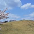 桜の山の頂上芝生広場