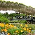 写真: 藤棚の橋
