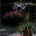 Photos: ブーツと傘の花飾り
